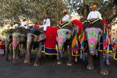Gangaur Festival-Jaipur people riding elephants — Stock Photo