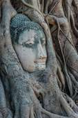 Buddha Head banyan tree Wat Mahathat Ayutthaya bangkok Thailand — Stock Photo