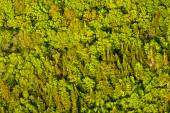 Aerial view of green trees forest  in quebec canada — Stock Photo