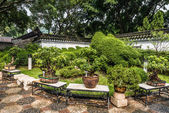 Bonsai garden Kowloon Walled City Park Hong Kong — Stock Photo