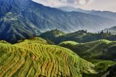 Rice terraced fields Wengjia longji Longsheng Hunan China — Stock Photo
