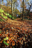 Fall Footpath — Stock Photo