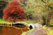 Fall Color — Stockfoto