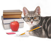 Smart Cat Writing with Books on White — Stock Photo