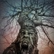 Old Scary Tree With Angry Face in Woods — Stock Photo #54373273