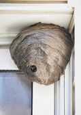 Bee Hive Nest Hanging from House — Stock Photo