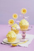 Yellow cupcakes — Stock Photo
