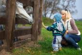 Mother with two-year child feed horse — Stock Photo