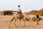 Arab boy rolls tourists on a camel. — Stock Photo