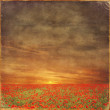 The very big blooming poppies field during sunny day with grungy effect — Stock Photo #59528999