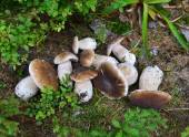 White mushrooms on the grass in the forest  — Stockfoto