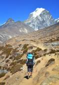 Hiker with backpack  in the himalayas — Stock Photo