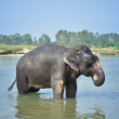 Cute Asian elephant blowing water out of his trunk — Stock Photo #70581853