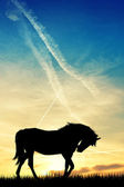 Gün batımında at — Stok fotoğraf