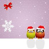 Owls at Christmas — Stock Photo