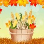 Corn for Thanksgiving — Stock Photo #56711975