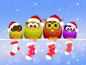 Family of owls at Christmas — Stock Photo