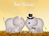 Wedding of elephants — Stock Photo