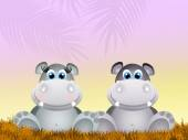 Hippos in love — Stock Photo