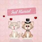 Wedding of cats — Stock Photo