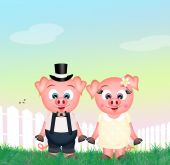 Funny pigs — Stock Photo