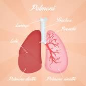 Respiratory system — Stock Photo