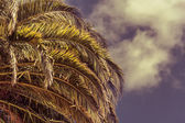 Palm leaves  on blue sky background — Stock Photo