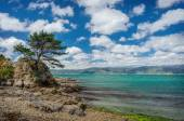 Pine-tree overlooking the sea, at a rocky coast — Stock Photo