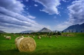 Hay stack in a summer field — Stock Photo