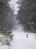 Cane congelato — Foto Stock