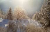 Snötäckt skog — Stockfoto