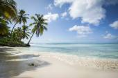 Idyllic Caribbean coastline — Stock Photo