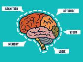 Capabilities of the human brain. Mindmap and infocharts  — Vector de stock