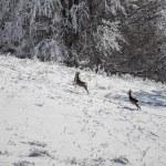 Winter landscape — Stock Photo #59986467