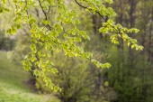 Twig with leaves — Stock Photo