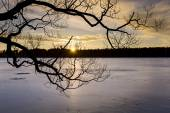 Silhouette of tree over frozen lake at sunset — Stock Photo