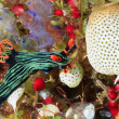 Nudibranch eating Ascidians — Stock Photo #61595219