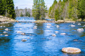 Slowly flowing river with plenty of rocks — Stock Photo