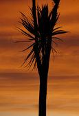 Palm tree silhouette sunset — Stock fotografie