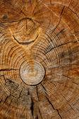 Rough cut of tree trunk — Stock Photo