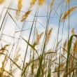 Grass in the field on  sunset — Stock Photo #63010045