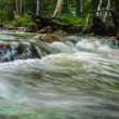 River in wood — Stock Photo #65201939