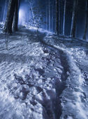 Night winter forest — Stock Photo