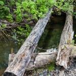 Old broken timbered bridge through river — Stock Photo #65674537