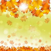 Autumn Yellow Leaves Bright Background — Stok fotoğraf