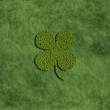 Four leaf clover created by trees — Stock Photo #72229377