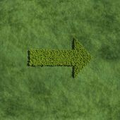 Arrow create by tree with grass background — Stock Photo