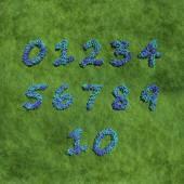Numbers created by blue flowers — Zdjęcie stockowe
