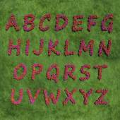Alphabet created by red color flowers — Stock Photo