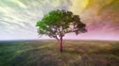 Sunset clouds and tree — Stock Photo